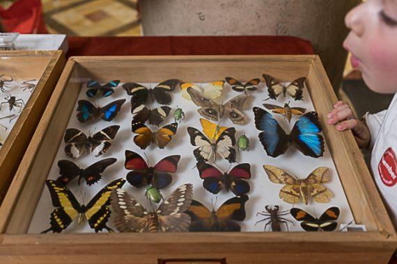 The Bug Fair 2017: LA Natural History Museum