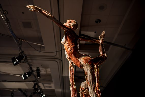 California Science Center – Body Worlds: Pulse