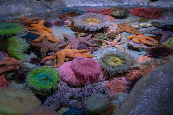 The Aquarium of the Pacific – Long Beach, CA