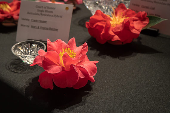 Spring Camellia Show – La Canada-Flintridge, CA