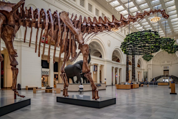 Dinosaurs at the Field Museum!