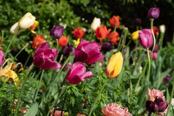 Descanso Gardens in the Spring